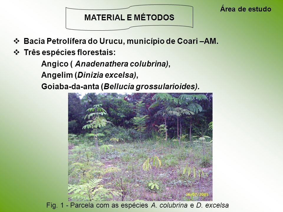 Bacia Petrolífera do Urucu, município de Coari –AM. Três espécies florestais: Angico ( Anadenathera colubrina), Angelim (Dinizia excelsa), Goiaba-da-a