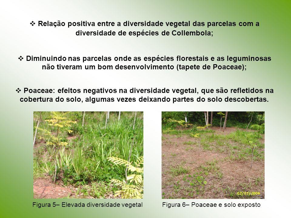 Relação positiva entre a diversidade vegetal das parcelas com a diversidade de espécies de Collembola; Diminuindo nas parcelas onde as espécies flores