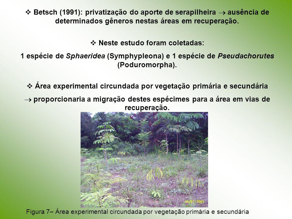 Betsch (1991): privatização do aporte de serapilheira ausência de determinados gêneros nestas áreas em recuperação. Neste estudo foram coletadas: 1 es