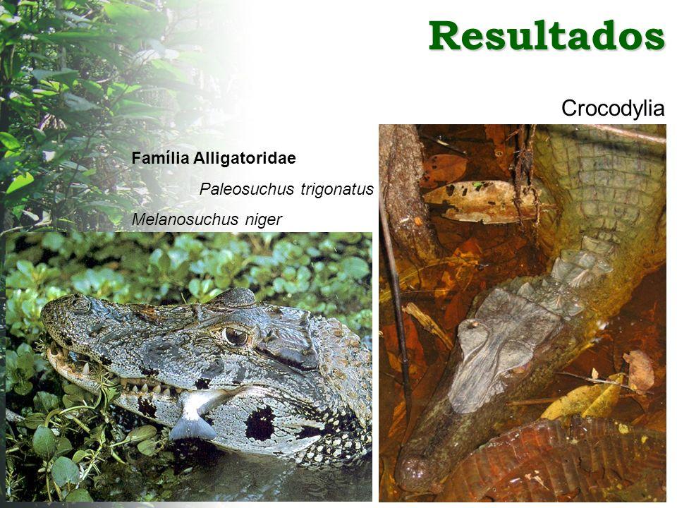 Resultados Crocodylia Família Alligatoridae Paleosuchus trigonatus Melanosuchus niger