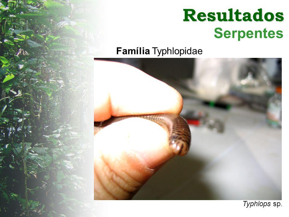 Resultados Serpentes Typhlops sp. Família Typhlopidae