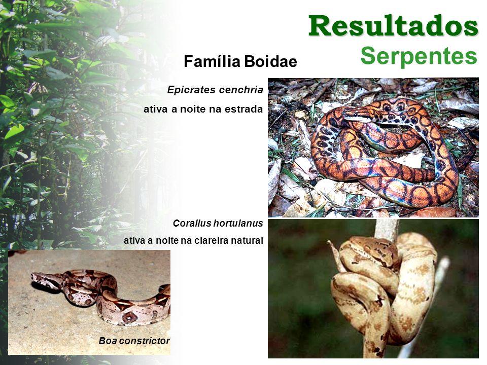 Resultados Serpentes Família Boidae Corallus hortulanus ativa a noite na clareira natural Epicrates cenchria ativa a noite na estrada Boa constrictor
