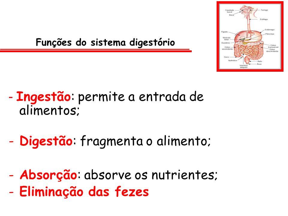 - Ingestão: permite a entrada de alimentos; -D-Digestão: fragmenta o alimento; -A-Absor ç ão: absorve os nutrientes; -E-Elimina ç ão das fezes Funções