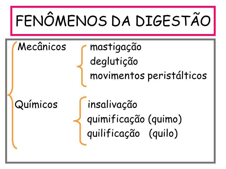 FENÔMENOS DA DIGESTÃO Mecânicos mastigação deglutição movimentos peristálticos Químicos insalivação quimificação (quimo) quilificação (quilo)