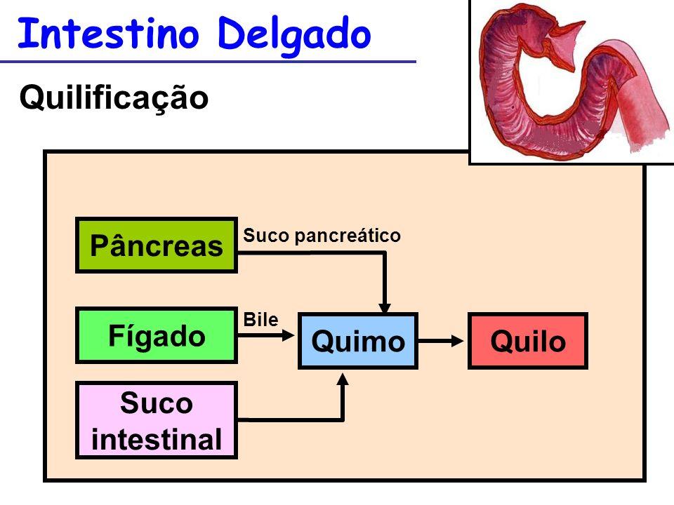 Intestino Delgado Quilificação QuiloQuimo Pâncreas Fígado Suco intestinal Suco pancreático Bile