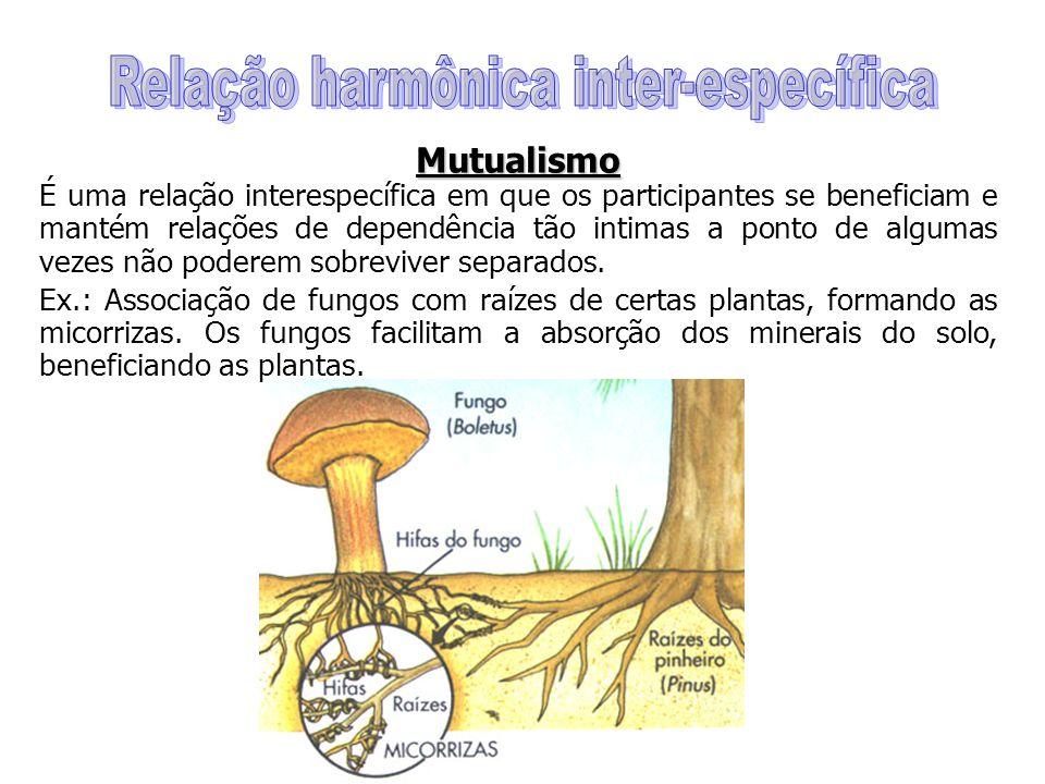 Mutualismo Mutualismo É uma relação interespecífica em que os participantes se beneficiam e mantém relações de dependência tão intimas a ponto de algumas vezes não poderem sobreviver separados.