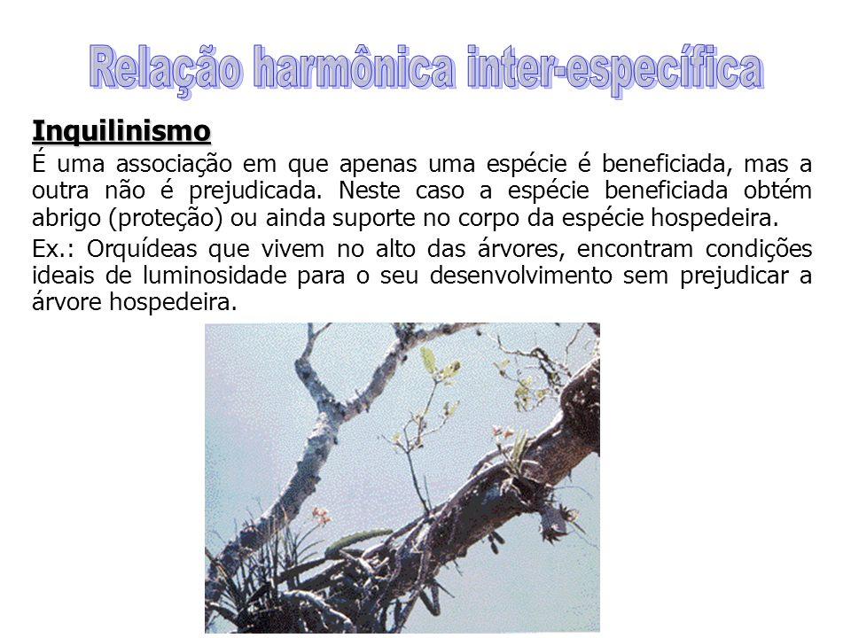 Inquilinismo É uma associação em que apenas uma espécie é beneficiada, mas a outra não é prejudicada.
