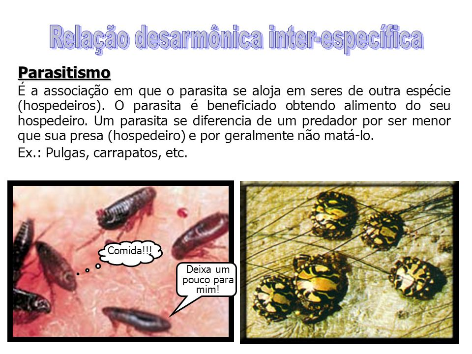 Parasitismo É a associação em que o parasita se aloja em seres de outra espécie (hospedeiros).