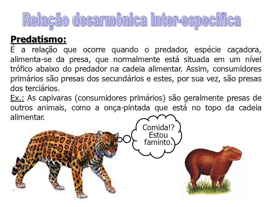 Predatismo: É a relação que ocorre quando o predador, espécie caçadora, alimenta-se da presa, que normalmente está situada em um nível trófico abaixo do predador na cadeia alimentar.