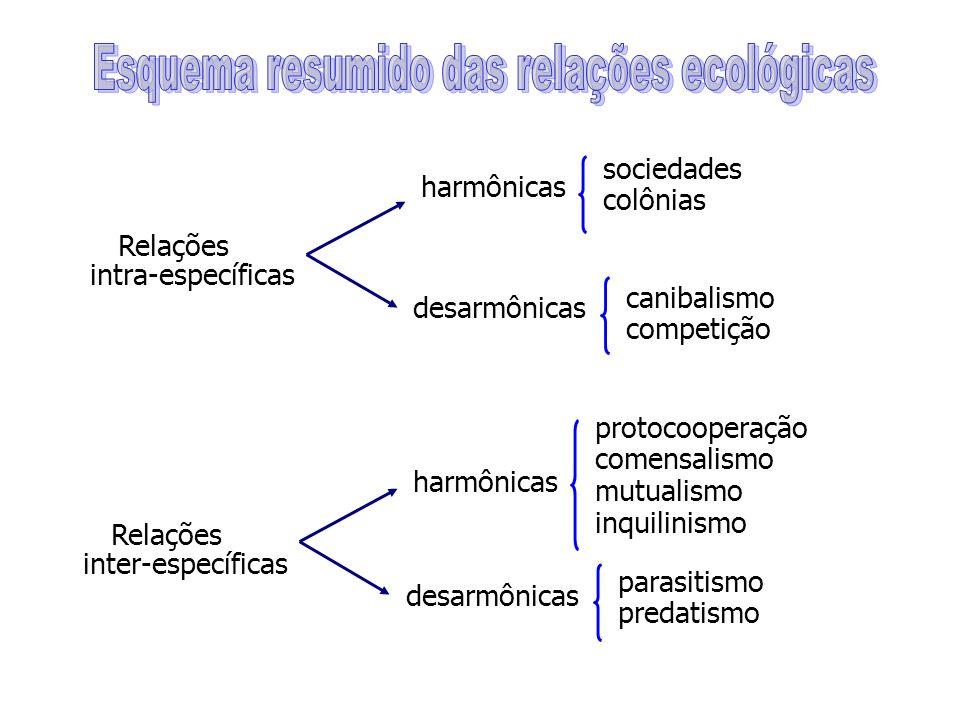 Relações intra-específicas harmônicas desarmônicas sociedades colônias canibalismo competição Relações inter-específicas harmônicas desarmônicas protocooperação comensalismo mutualismo inquilinismo parasitismo predatismo