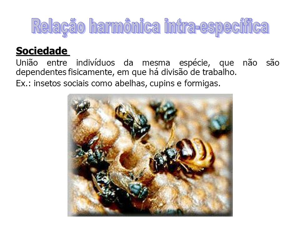Sociedade União entre indivíduos da mesma espécie, que não são dependentes fisicamente, em que há divisão de trabalho. Ex.: insetos sociais como abelh
