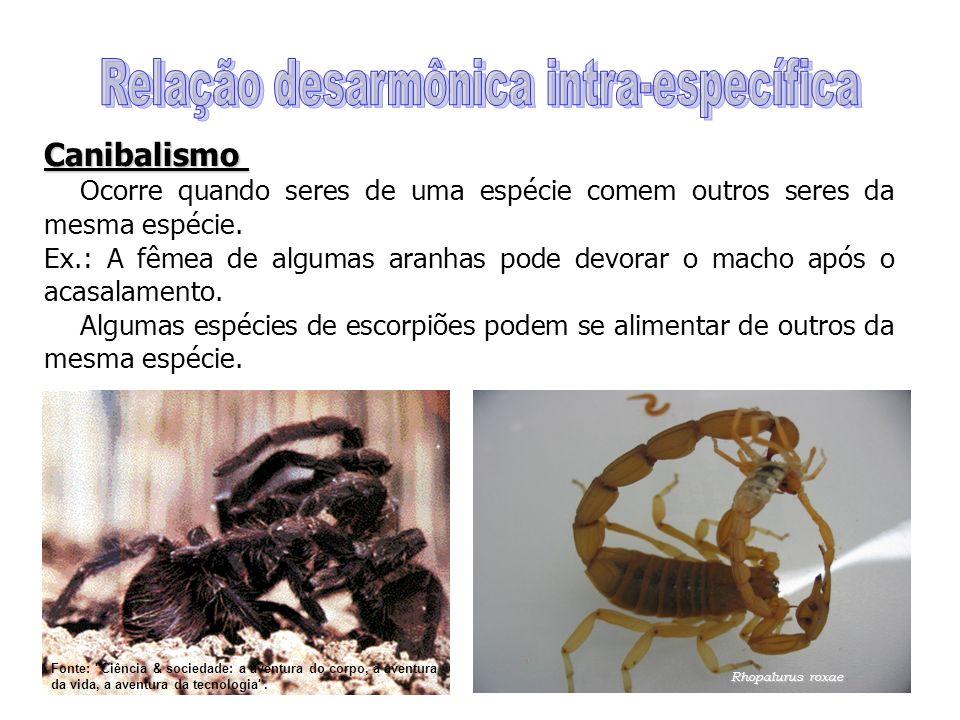 Canibalismo Ocorre quando seres de uma espécie comem outros seres da mesma espécie. Ex.: A fêmea de algumas aranhas pode devorar o macho após o acasal