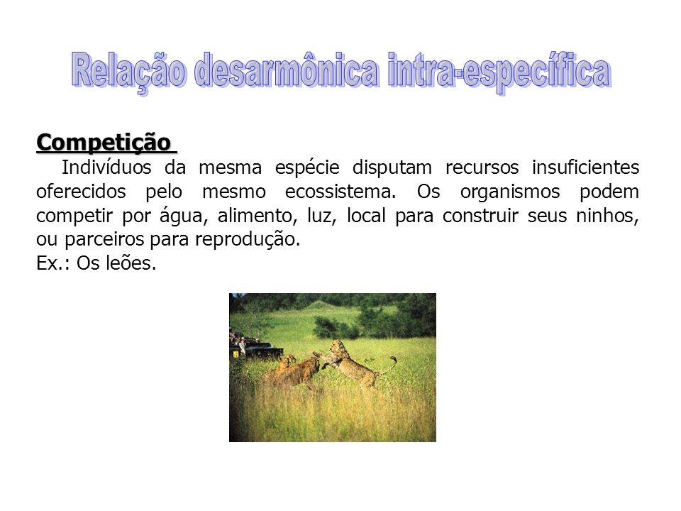 Competição Indivíduos da mesma espécie disputam recursos insuficientes oferecidos pelo mesmo ecossistema.