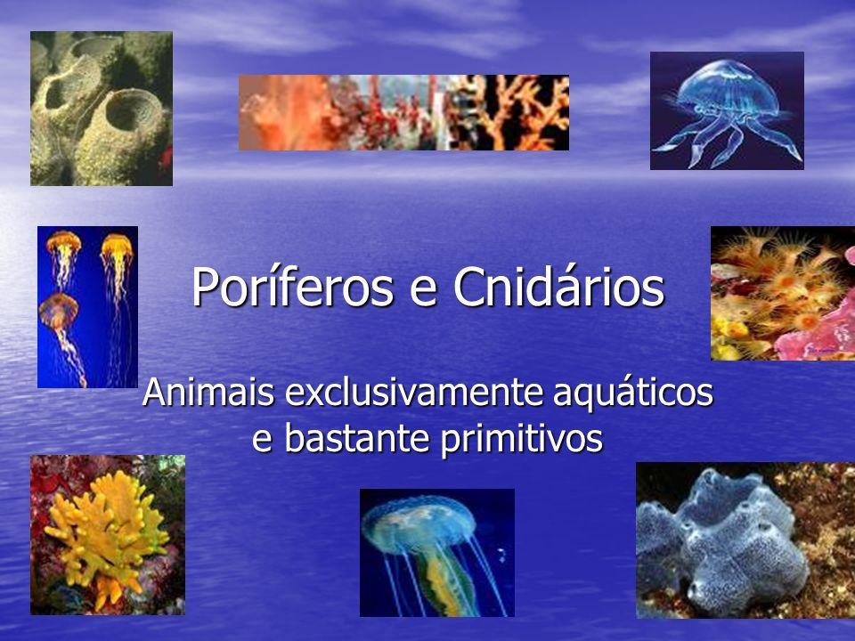 Poríferos e Cnidários Animais exclusivamente aquáticos e bastante primitivos