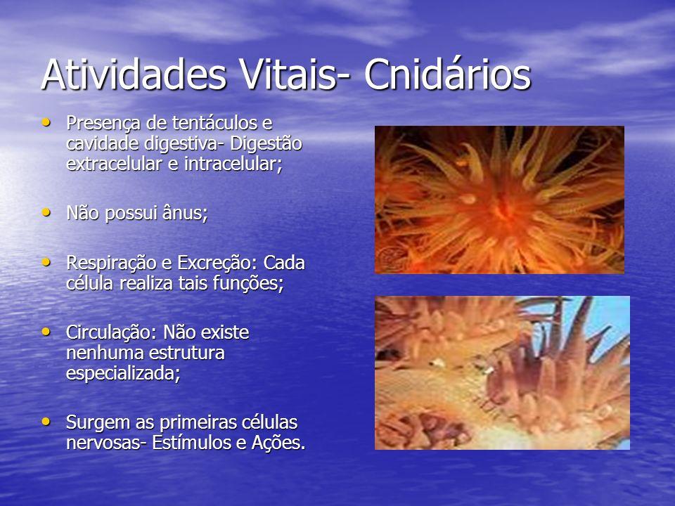 Atividades Vitais- Cnidários Presença de tentáculos e cavidade digestiva- Digestão extracelular e intracelular; Presença de tentáculos e cavidade dige