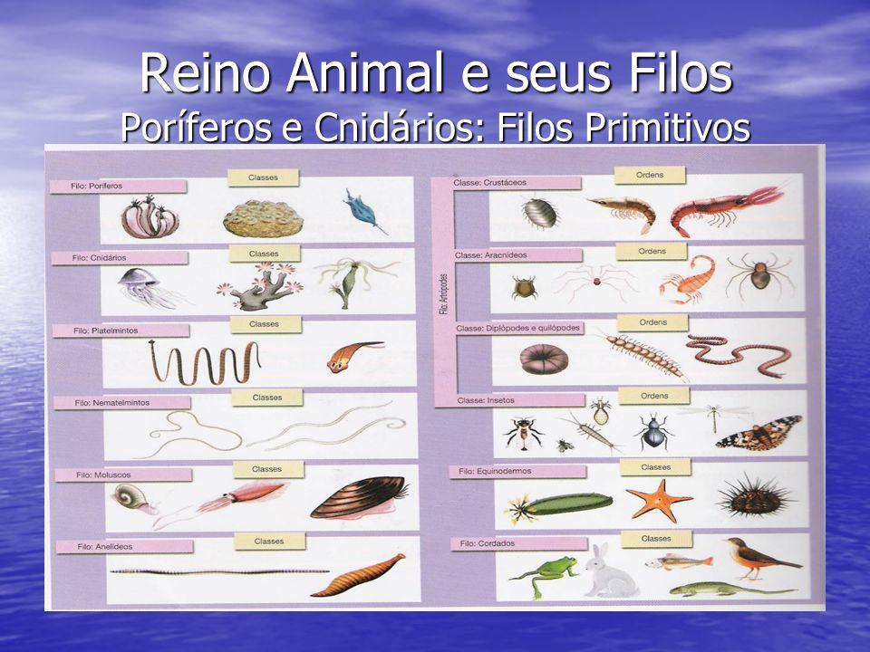 Características Gerais Poríferos: Animais portadores de poros ou orifícios Também chamados de esponjas ; Também chamados de esponjas ; Exclusivamente aquáticos ( Doce ou Salgada*); Exclusivamente aquáticos ( Doce ou Salgada*); Animais fixos ou sésseis; Animais fixos ou sésseis; Animais filtradores; Animais filtradores; Ausência de sistema nervoso; Ausência de sistema nervoso; Animais com coloração e formas variadas.