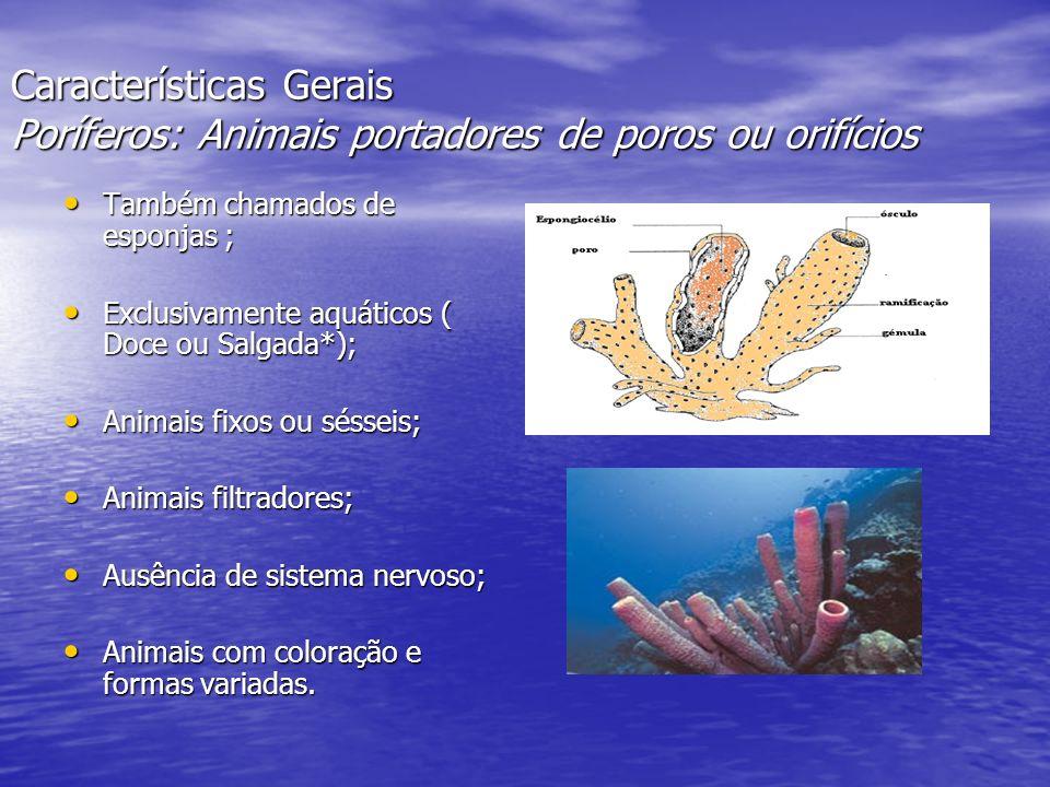 Características Gerais Poríferos: Animais portadores de poros ou orifícios Também chamados de esponjas ; Também chamados de esponjas ; Exclusivamente