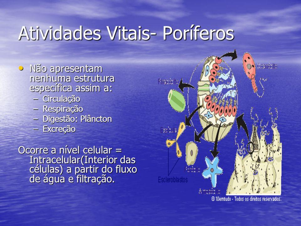 Atividades Vitais- Poríferos Não apresentam nenhuma estrutura específica assim a: Não apresentam nenhuma estrutura específica assim a: –Circulação –Re