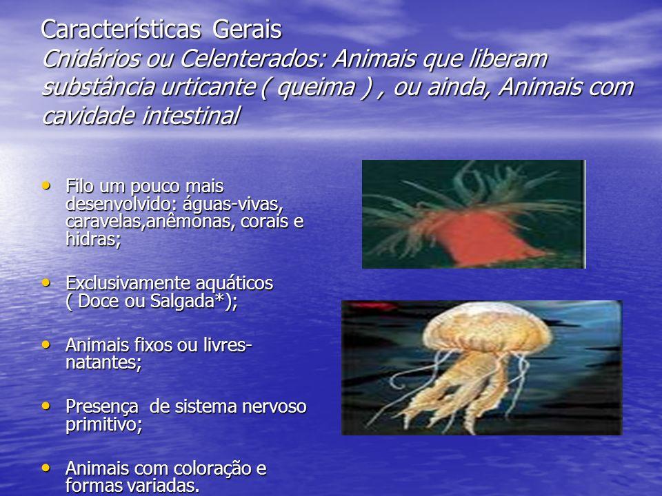 Características Gerais- Estrutura Possuem um formato de um tubo cheio de tentáculos ao redor da boca- Pólipos; Possuem um formato de um tubo cheio de tentáculos ao redor da boca- Pólipos; Presença de células chamadas de cnidoblastos - Substância Urticante Presença de células chamadas de cnidoblastos - Substância Urticante ( Defesa ou captura de um outro animal)