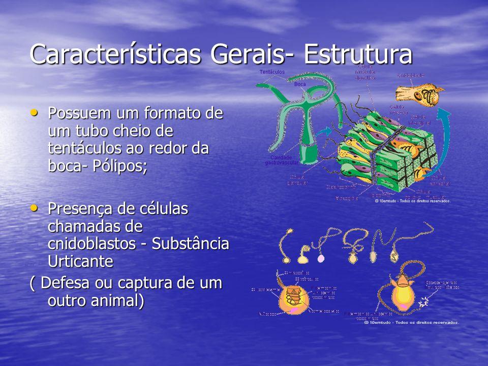 Características Gerais- Estrutura Possuem um formato de um tubo cheio de tentáculos ao redor da boca- Pólipos; Possuem um formato de um tubo cheio de