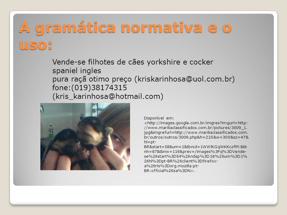 A gramática normativa e o uso: Vende-se filhotes de cães yorkshire e cocker spaniel ingles pura raçã otimo preço (kriskarinhosa@uol.com.br) fone:(019)