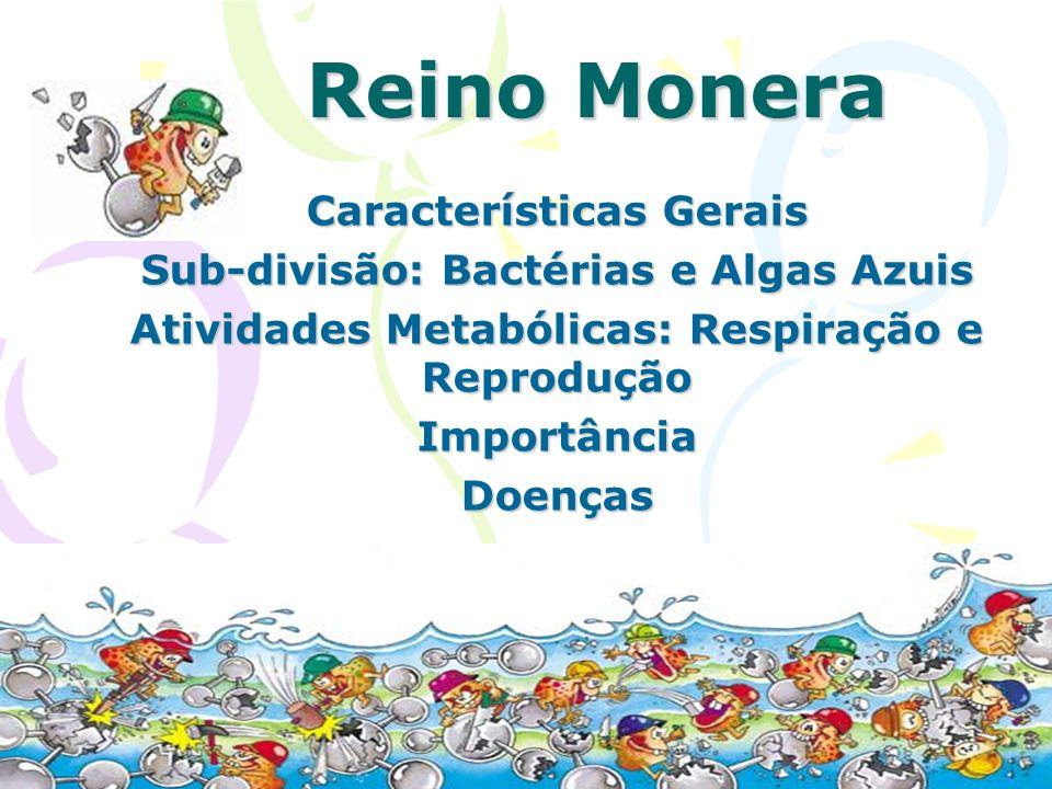 Características Gerais Reino Monera: Seres vivos microscópicos e mais primitivos; Seres Unicelulares; Seres Procariontes ( Núcleo celular difuso); Vivem isolados ou agrupados em colônia; Estão divididos em: Bactérias e Algas Azuis.