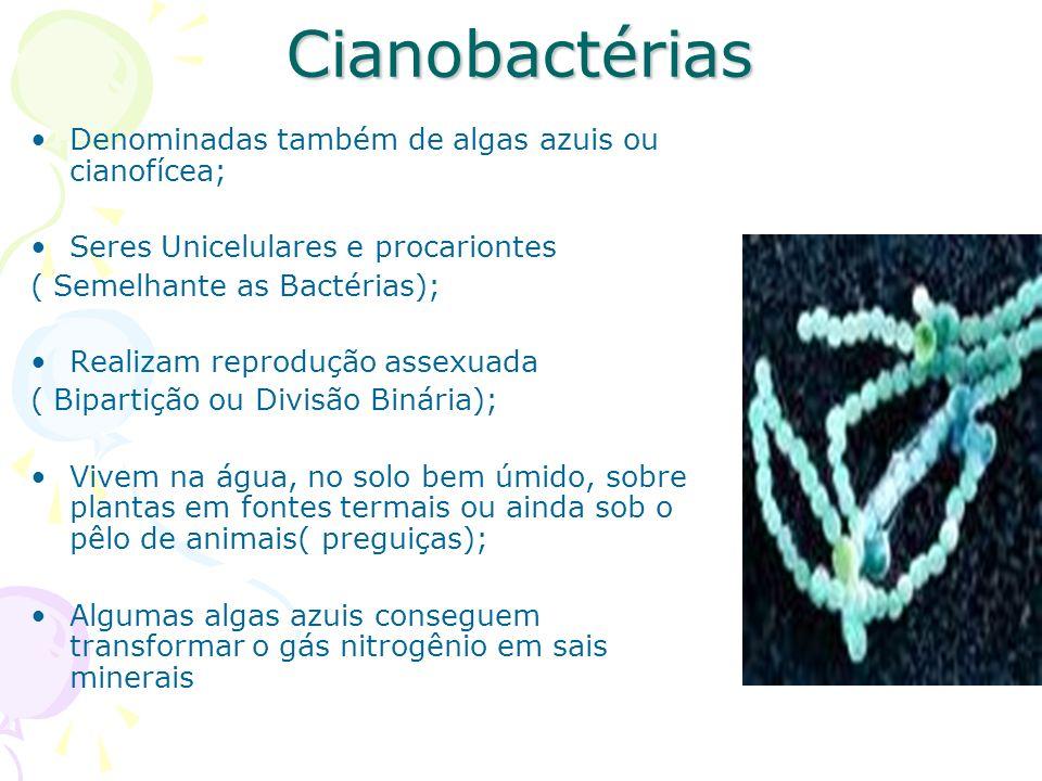 Cianobactérias Denominadas também de algas azuis ou cianofícea; Seres Unicelulares e procariontes ( Semelhante as Bactérias); Realizam reprodução assexuada ( Bipartição ou Divisão Binária); Vivem na água, no solo bem úmido, sobre plantas em fontes termais ou ainda sob o pêlo de animais( preguiças); Algumas algas azuis conseguem transformar o gás nitrogênio em sais minerais