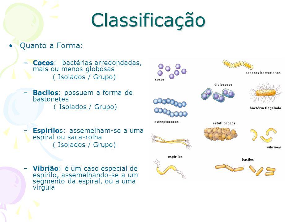 Classificação Quanto a Forma: –Cocos –Cocos: bactérias arredondadas, mais ou menos globosas ( Isolados / Grupo) –Bacilos: possuem a forma de bastonetes ( Isolados / Grupo) –Espirilos: assemelham-se a uma espiral ou saca-rolha ( Isolados / Grupo) –Vibrião: é um caso especial de espirilo, assemelhando-se a um segmento da espiral, ou a uma vírgula