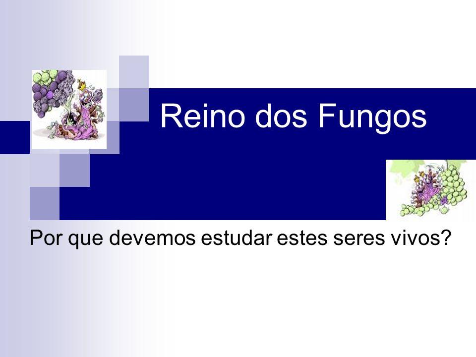 Reino dos Fungos Por que devemos estudar estes seres vivos?