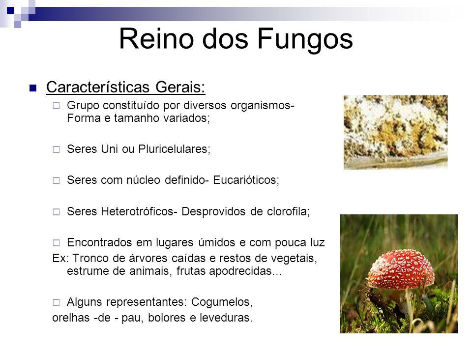 Reino dos Fungos Características Gerais: Grupo constituído por diversos organismos- Forma e tamanho variados; Seres Uni ou Pluricelulares; Seres com n