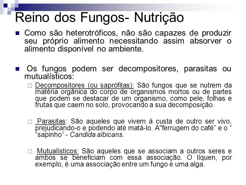 Reino dos Fungos- Nutrição Como são heterotróficos, não são capazes de produzir seu próprio alimento necessitando assim absorver o alimento disponível