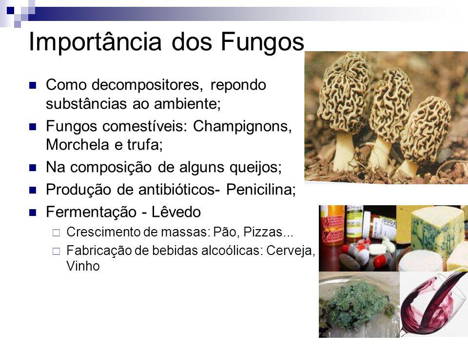 Importância dos Fungos Como decompositores, repondo substâncias ao ambiente; Fungos comestíveis: Champignons, Morchela e trufa; Na composição de algun