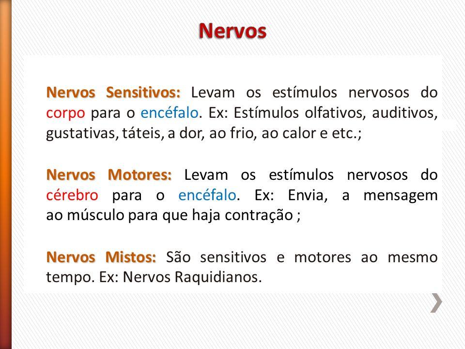 Nervos Sensitivos: Nervos Sensitivos: Levam os estímulos nervosos do corpo para o encéfalo. Ex: Estímulos olfativos, auditivos, gustativas, táteis, a