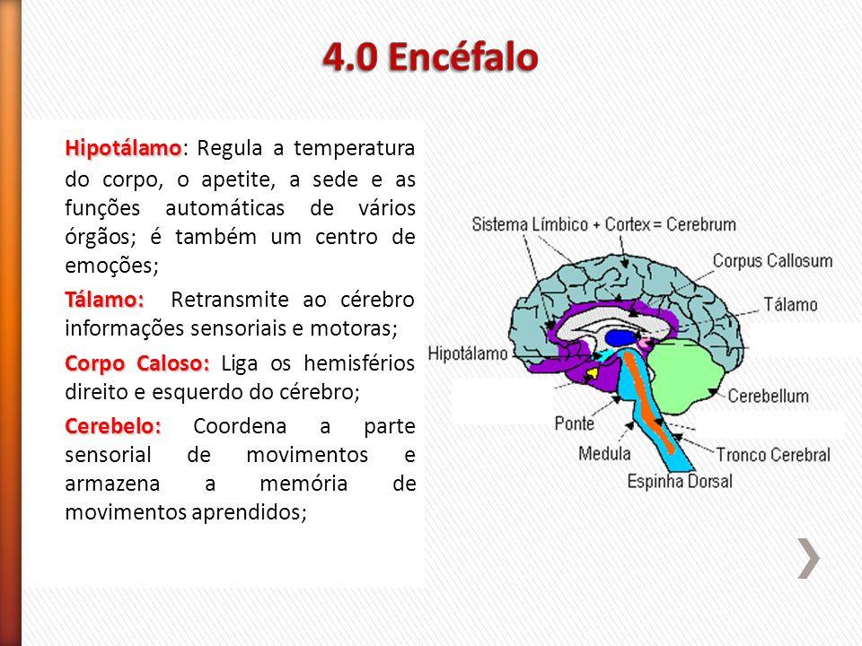 Hipotálamo Hipotálamo: Regula a temperatura do corpo, o apetite, a sede e as funções automáticas de vários órgãos; é também um centro de emoções; Tála
