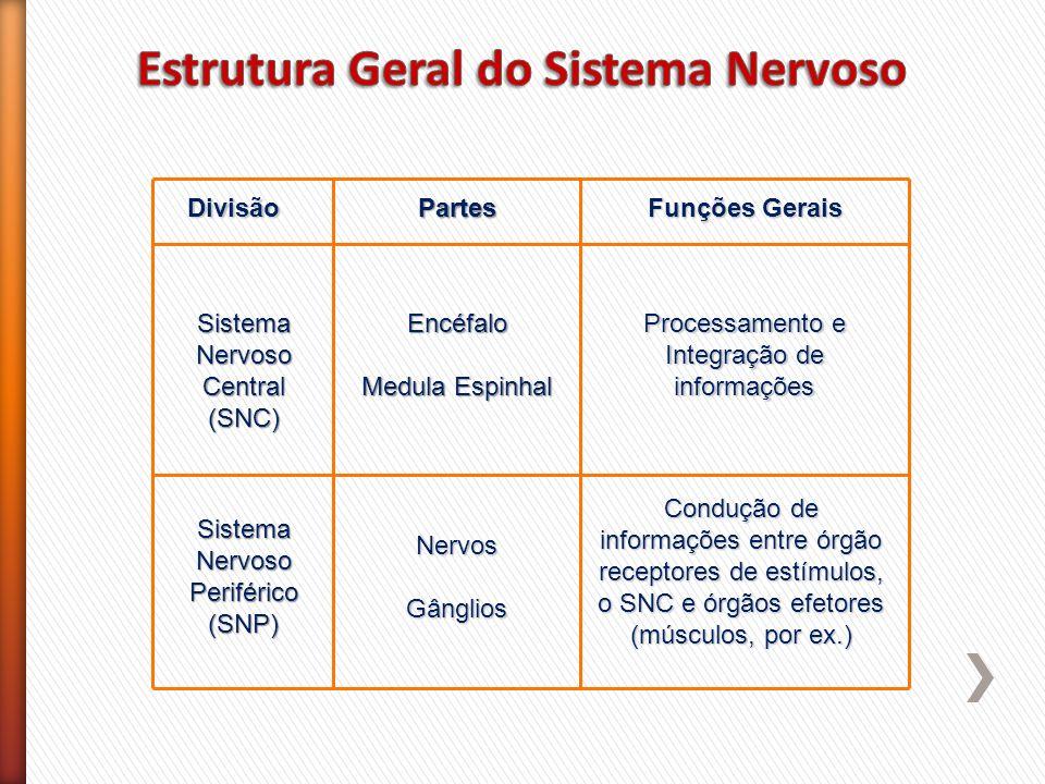 DivisãoPartes Funções Gerais Sistema Nervoso Central (SNC) Sistema Nervoso Periférico (SNP) Encéfalo Medula Espinhal NervosGânglios Processamento e In