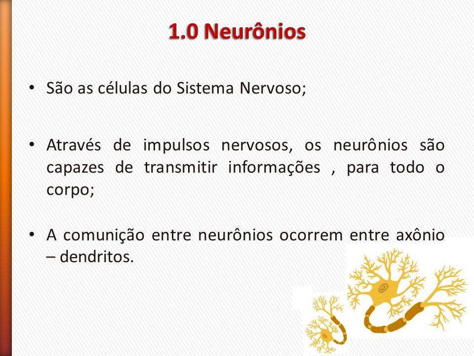 São as células do Sistema Nervoso; Através de impulsos nervosos, os neurônios são capazes de transmitir informações, para todo o corpo; A comunição en