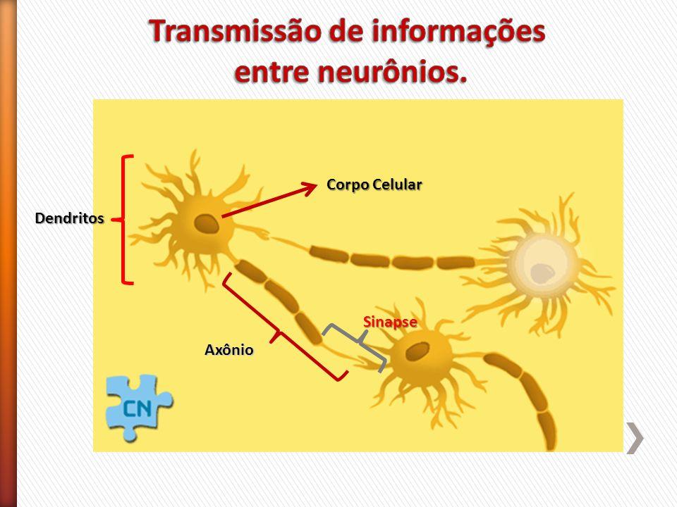 Dendritos Axônio Corpo Celular Sinapse