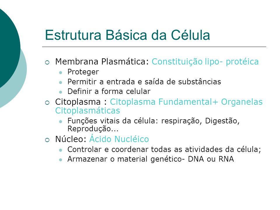 Estrutura Básica da Célula Membrana Plasmática: Constituição lipo- protéica Proteger Permitir a entrada e saída de substâncias Definir a forma celular