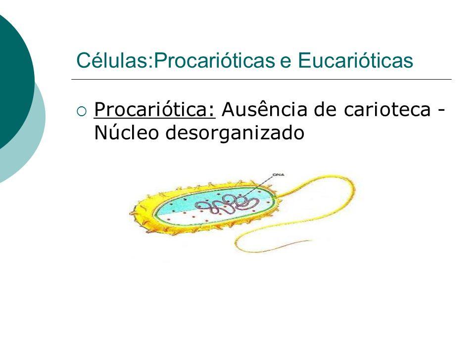 Células:Procarióticas e Eucarióticas Procariótica: Ausência de carioteca - Núcleo desorganizado