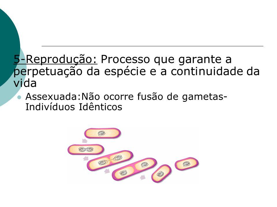 5-Reprodução: Processo que garante a perpetuação da espécie e a continuidade da vida Assexuada:Não ocorre fusão de gametas- Indivíduos Idênticos