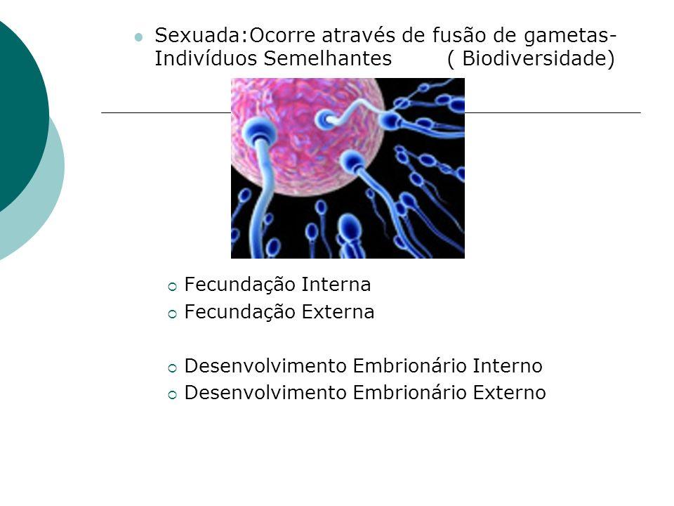 Sexuada:Ocorre através de fusão de gametas- Indivíduos Semelhantes ( Biodiversidade) Fecundação Interna Fecundação Externa Desenvolvimento Embrionário