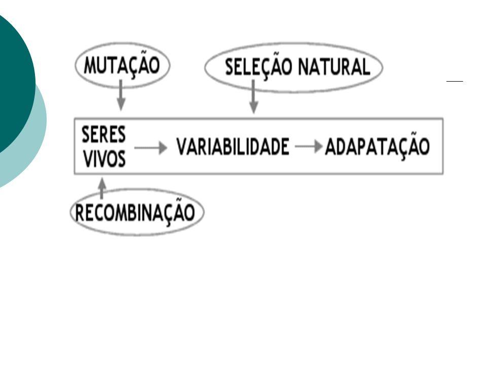 6-ORGANIZAÇÃO CELULAR