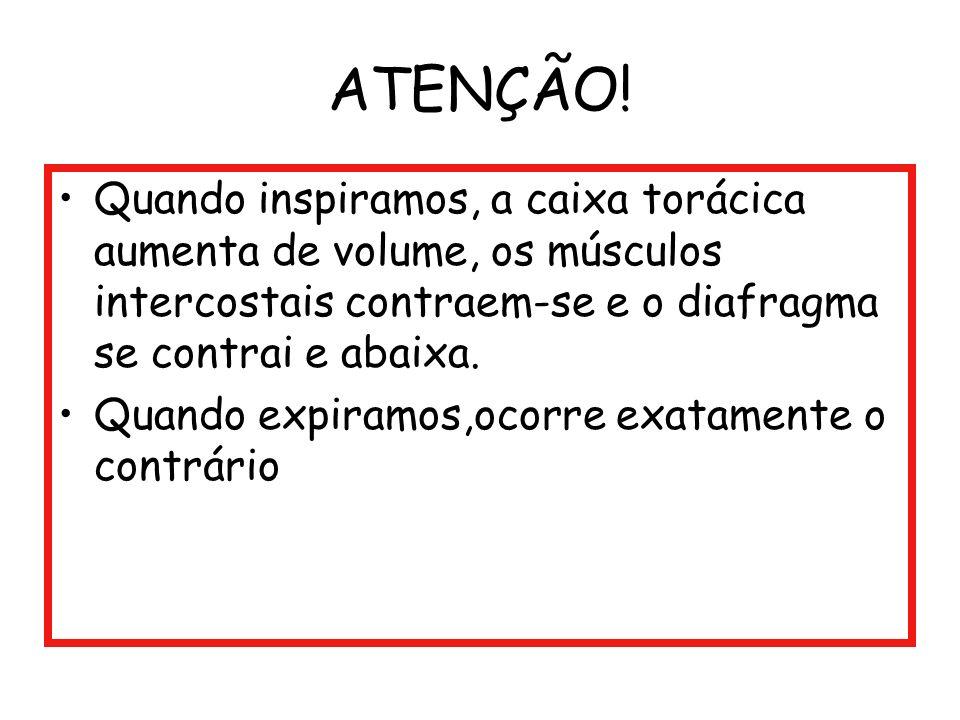 ATENÇÃO! Quando inspiramos, a caixa torácica aumenta de volume, os músculos intercostais contraem-se e o diafragma se contrai e abaixa. Quando expiram