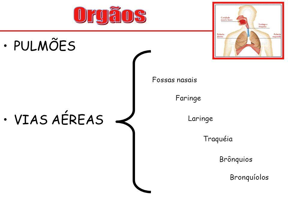 PULMÕES VIAS AÉREAS Fossas nasais Faringe Laringe Traquéia Brônquios Bronquíolos