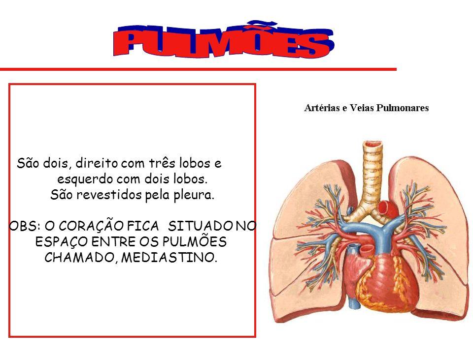 Na cavidade nasal o ar é aquecido e purificado.