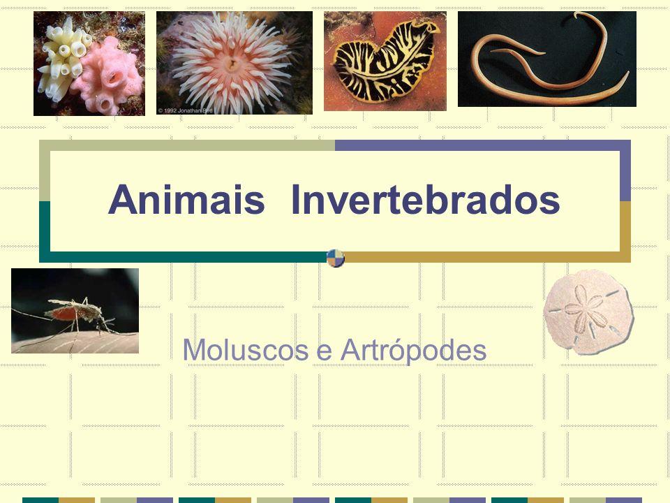 Animais Invertebrados Moluscos e Artrópodes