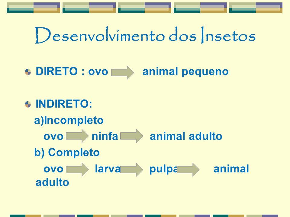Desenvolvimento dos Insetos DIRETO : ovo animal pequeno INDIRETO: a)Incompleto ovo ninfa animal adulto b) Completo ovo larva pulpa animal adulto