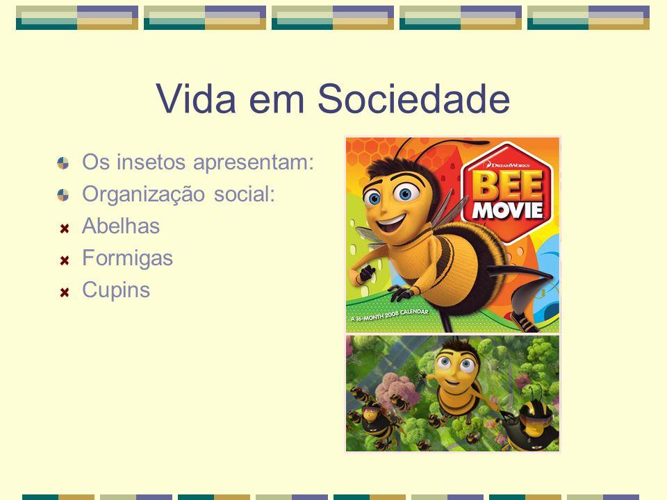 Vida em Sociedade Os insetos apresentam: Organização social: Abelhas Formigas Cupins