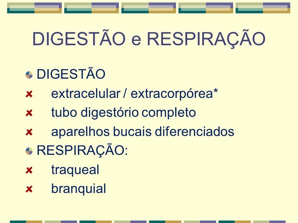 DIGESTÃO e RESPIRAÇÃO DIGESTÃO extracelular / extracorpórea* tubo digestório completo aparelhos bucais diferenciados RESPIRAÇÃO: traqueal branquial