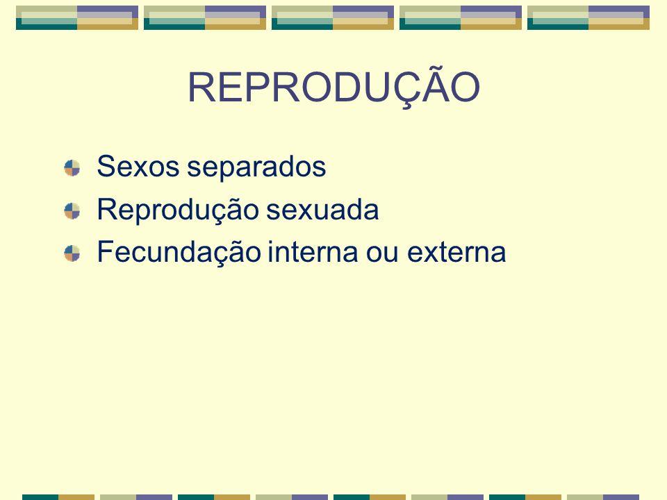 REPRODUÇÃO Sexos separados Reprodução sexuada Fecundação interna ou externa